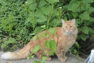 sittingcat